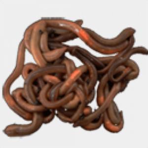 Tauwürmer